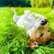 A dog sleeping on grass field